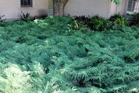 good plants for a shaded bank with deer around gardening q u0026a with