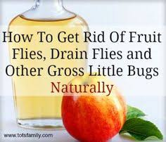 Get Rid Of Drain Flies Organic Matter Cleaning And Life Hacks - Small flies around kitchen sink