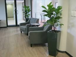 office plants durban square tapered pots