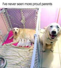 Memes Dog - 10 of the happiest dog memes ever that will make you smile from