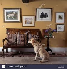 Country Living Room by Golden Labrador Dog Sitting Beside A Wooden Settle In A Country