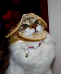 Cat In Bread Meme - 20 best inbread cats images on pinterest cat cats and gatos