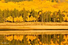 Colorado Fall Colors Map by Fall Colors In Colorado A Guide Travel With G