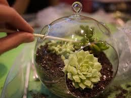 succulent kits decor diy hanging terrarium for home accessories ideas