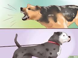 comment empecher mon chien de monter sur le canapé 3 ères de dresser un chien de garde wikihow