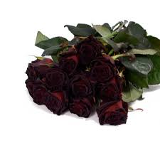 buy roses picture of black roses flowers black roses buy a bouquet of black