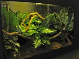 how to make fish tank decorations at home best 25 snake cages ideas on pinterest snake enclosure reptile