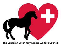 mustang horse logo the canadian veterinary equine welfare council u2013 united for equine