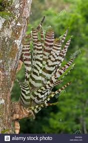 native rainforest plants yasuni plant plants ecuador stock photos u0026 yasuni plant plants