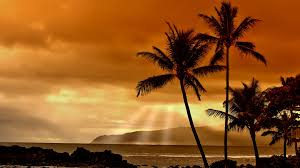 widescreen palm trees at sunset hd sea summer fresh on
