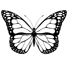 sketch of butterfly simple butterfly drawing drawing gallery