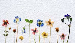 Dry Flowers Everlasting Flowers The Saturday Evening Post