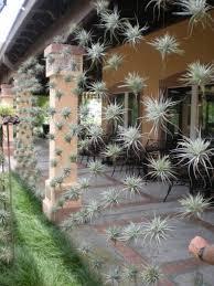 Succulent And Cacti Pictures Gallery Garden Design Amazing Vertical Garden Image Garden Social Garden Images