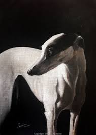 75 best greyhounds images on pinterest dogs greyhounds and
