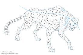 how to draw a cheetah u2013 last of the polar bears
