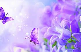 butterfly purple butterfly bliss bright lovely creative beautiful