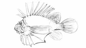 pencil sketch of sea fish royalty free video and stock footage