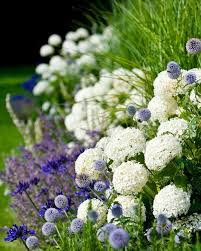 202 best flowers allium images on pinterest flowers