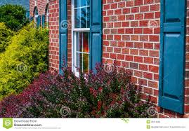 bushes and front of brick house with blue shutters stock images