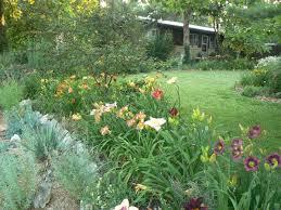 kansas native plants ann u0027s garden in kansas fine gardening