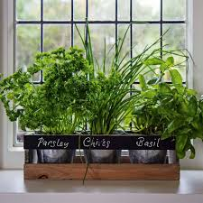 garden planter box wooden indoor herb kit kitchen seeds windowsill