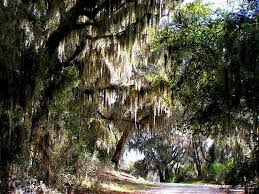 South Carolina natural attractions images Jasper county area south carolina lowcountry jpg