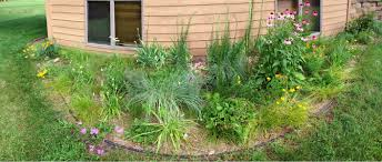 native plant garden residential native plant garden