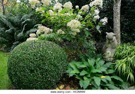 English Box Topiary - ball topiary stock photos u0026 ball topiary stock images alamy