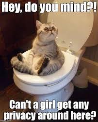 Cat Sitting Meme - cat sitting on toilet memes imgflip