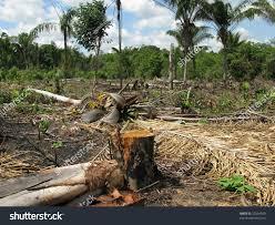 amazon rainforest native plants deforestation amazon rainforest stock illustration 22364920