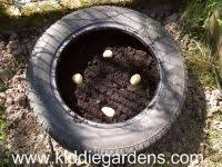 Container Gardening Potatoes - step by step on growing potatoes in tires outside pinterest