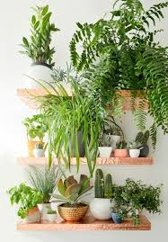 decor indoor greenery ideas with beautiful indoor plants and