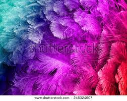 ostrich feather l shade colorful ostrich feather background stock photo edit now shutterstock