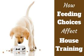 how much to feed a puppy lab