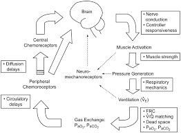 control of breathing during mechanical ventilation who is the
