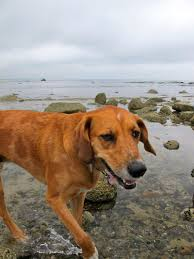 gracie u0027s bark pet friendly resource dog friendly in cape cod ma