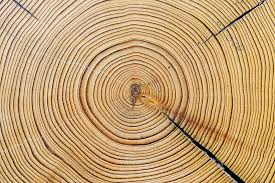 tree rings the and age of nature the daily wildcat