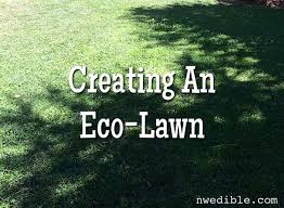 how and why to make an eco lawn northwest edible life