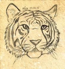sketch tiger head 6 by starlightmemory on deviantart