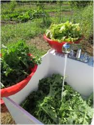 homestead heroes best fruits and vegetables for self sufficiency