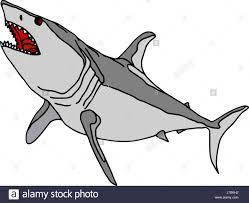 isolated illustration shark cartoon draw danger life exist