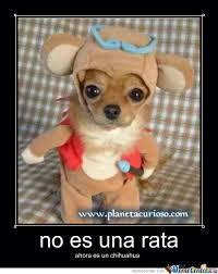 Memes De Chihuahua - the chihuahua by david22 meme center