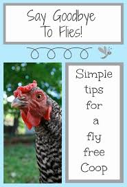 Can You Have Chickens In Your Backyard Backyard Chickens How To Get Rid Of Flies