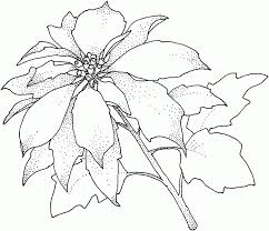 poinsettia coloring pages photos u003e for the best coloring