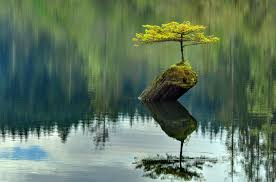 bonsai fir tree lake earthling opinion