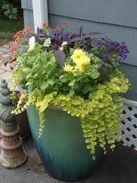 tall planters allow room for beautiful trailing annuals pots