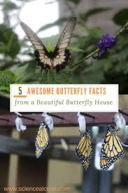 best 25 butterfly facts for kids ideas on pinterest kite tube