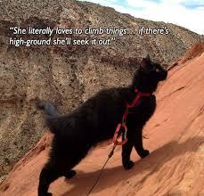 Rock Climbing Memes - meet millie the mountain climbing cat weknowmemes