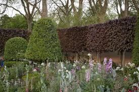 gardening 101 copper beech gardenista