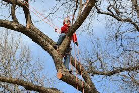 winter is an opportune time for pruning trees arborilogical services